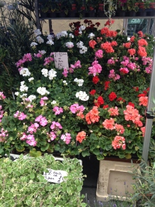 One of the flower stalls in the 'Fresh n Green' section on Norwood Road